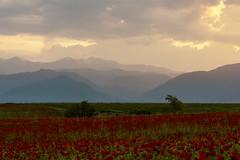 May in Ismayilli (Ilkin Kangarli) Tags: flowers trees mountains field spring may azerbaijan caucasus       ismayilli