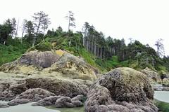 Low Tide (Patricia Henschen) Tags: ocean beach starfish olympicpeninsula pacificocean shore lowtide olympicnationalpark tidepool seaanemone beach3