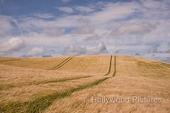 DSC_6075 (Fran Hollywood Autosportpics.com) Tags: ireland summer sky field barley clouds rural landscape countryside farming cereal harvest crop wexford sunnysoutheast leinster arable curracloe