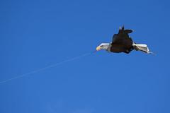 Voler (Jean-Pierre Bérubé) Tags: kite flying cerfvolant voler volet flickrfriday jpdu12 jeanpierrebérubé