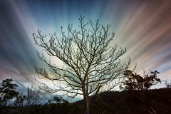 Tree of Last Light (Crouchy69) Tags: blue sunset sky plant motion mountains tree clouds landscape long exposure dusk branches sydney australia retreat valley elsewhere megalong