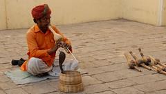 Snake charmer in India - and that's a real cobra! (tehi75) Tags: india nikon cobra snake culture jaipur charmer