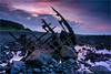 Wreck of The Gairloch (Darkelf Photography) Tags: gairloch shipwreck wreck taranaki coast shore oakura timaru sunset evening dusk tasman sea landscape seascape newzealand nz north island clouds rocks canon filter 5div 24105mm maciek gornisiewicz darkelf photography 2016