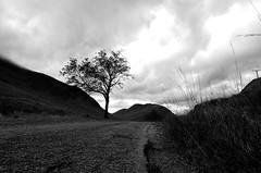 single track road (Fearghàl Nessbank) Tags: nikon d5100 tokina mono bw monochrome blackwhite blackwhitephotos