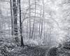 Going your own Way... (Ody on the mount) Tags: anlässe bäume licht nebel pflanzen schwäbischealb wald wanderung wege bw monochrome sw sanktjohann badenwürttemberg deutschland de