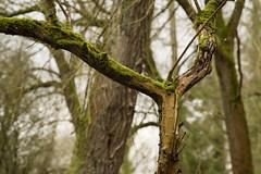 20170104-_IMG0944-Edit (fleetingphotons) Tags: pentaxk1 smcpentaxa200mmf28ed wasingestate fishing warrenbeat kennet trees