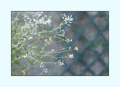 P- Hoa xuân (moon 68) Tags: flower treo anh noi that