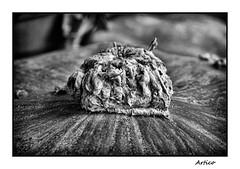 Alien volcano B&W (Artico7) Tags: pumpkin dry stem alien volcano nature bw blackwhite blackandwhite biancoenero monochrome zucca vulcano picciolo fuji xe1 macro detail
