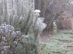 Monday, 23rd, White and frosty start IMG_2175 (tomylees) Tags: january 2017 23rd monday essex morning winter garden frost cold