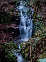 2017-01-17 Rivelin-7433.jpg (Elf Call) Tags: nikon rivelin river yorkshire water stream 18105 sheffield steppingstones waterfall d7200 blurred