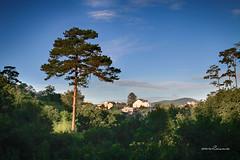 Lone Pine Tree* (loiamve2009) Tags: tree pine hill vietnam lt
