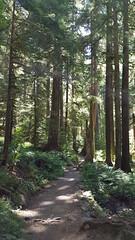 Pretty path through some wonderful forest