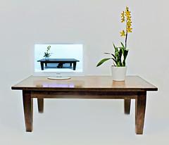 Orchidee op tafel (shutterhappy_nl) Tags: tv kat fotografie op orchidee poes bloemen bloem televisie tafel bloempot conceptuele gensceneerde