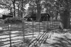 (Tina Jarnling) Tags: light blackandwhite nature fence natur svartvit ljus gärdesgård
