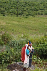 (Carrascal Girl) Tags: train women tea sri lanka srilanka ceylon hillcountry teaplantation teaestate pickers teapickers ceylontea