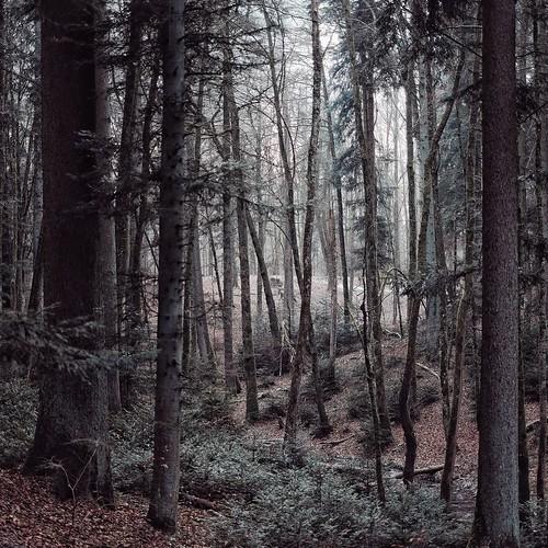 sub zero - forest