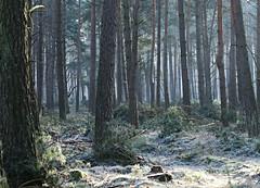 Mysterious wood (Magreen2) Tags: wood trees light hoar cold icy atmosphere mood green fog mysterious dreamy unreal wald geheimnissvoll bäume verträumt kälte rauhreif frost nebel stimmung