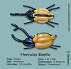 A-Z of Endangered Species – Hercules Beetle (magirob) Tags: hercules beetle jungle rainforest balloon model twisting twist