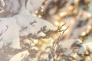 Winter's Embrace - A Winter Journey