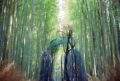 Lost in Kyoto (Hayden_Williams) Tags: bamboo arashiyama arashiyamabamboogrove grove bamboogrove forest kyoto japan travel explore adventure dream aloneinkyoto doubleexposure multipleexposure dreamy canonae1 film analog analogue green nature