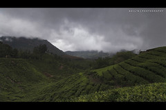 On the way to Topstation, Munnar, Kerala (aH!L) Tags: munnar kerala topstation godsowncountry greenery hillstation
