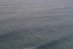 Da dove di dovrebbero vedere le americhe piú a ovest possibile per capire quanto siamo il nulla (bino bruneo) Tags: nikond3000 estremità portogallo orizzonte view ocean sea americhe oceano