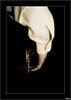 Flamenco en compás de espera (V- strom) Tags: flamenco camisa guitarra texturas recuerdo luz nikon2470 nikon nikon50mm