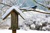 scrub  jay in the snow (artistgal) Tags: snow december bluejay scrubjay bird birdfeeder perched