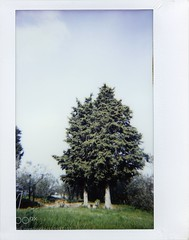 Evergreens (John. Blakey) Tags: ifttt 500px trees winter fuji analog countryside country wide lomography analogue toscana evergreen tuscany verde instant alberi instax inverno wintertime campagna invernale sempreverde instaxwide lomoinstantwide ininverno