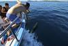 Dolphins in the front of boat Mikado (Kornati Excursions) Tags: kornatiexcursions kornati npkornati izletinakornate mikado zadar wwwmikadotourscom tours national park boattrip boat water summer dolphins