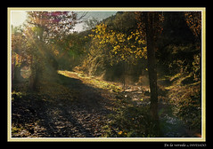 En la vereda (invesado) Tags: texturas flares sol vereda landscape d7100 sigma