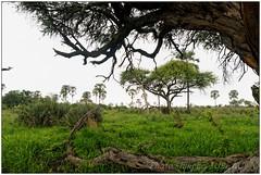 DSC08639PJ_resultat (http://phj.bookfoto.com/) Tags: botswana philippe jubeau afrique delta okavango