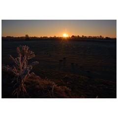 Ein Hauch von Glitzer (Nikonfotografie) Tags: colorphotography fineartphotography nikond7100 nikonofficials nikon meinnorden landschaftsfotografie landscapephotography landscape landschaft natur winterstimmung winter glitzer frost niedersachsen norddeutschland