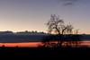 Pels camins de los Esclapers   Vilagrassa   Urgell (Ramon Oromí Farré [calBenido]) Tags: vilagrassa catalunya españa es esclapers urgell planadelleida planadurgell lleida provínciadelleida terresdelleida sunset postadesol anochecer vespre capvespre zepa espainaturalprotegitdanglesolavilagrassa arbre árbol tree cel cielo sky clouds nubes núvols contrast contraste evening light luz llum nikon nikkor d7100 tamron hiking outdoor pelscamins january gener enero winter invierno hivern new nuevo nou golden daurat dorado sunlight flickr country outside atardecer