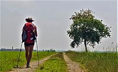 Via Francigena - Santhià - Vercelli