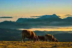Ya amanece... (Jabi Artaraz) Tags: mañana paz amanecer zb vacas gorbea brumas anboto terneros euskoflickr jartaraz