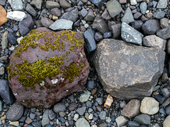 mossy rock and not mossy rock