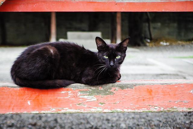 Today's Cat@2015-07-04