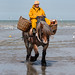 "2015_08_07_Paardenvissers_Oostduinkerke-55 • <a style=""font-size:0.8em;"" href=""http://www.flickr.com/photos/100070713@N08/19781440294/"" target=""_blank"">View on Flickr</a>"