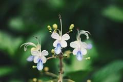 (Deirdre DiFazio) Tags: flower southcarolina charleston