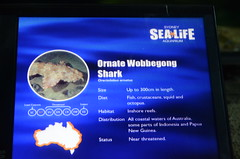 Ornate Wobbegong Shark, Orectolobus ornatus - Sydney Aquarium - sign (avlxyz) Tags: aquarium sydney australia sydneyaquarium fb5