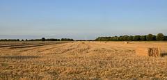 Holderness Harvest (cdwpix) Tags: stone creek yorkshire harvest straw east bales humber holderness