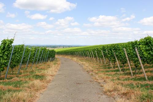 Vignes à Bühl