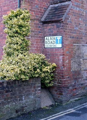 Alma Road 5/365 (3)