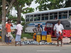 _B115755 Fish market in Galle.jpg (JorunT) Tags: fisk galle srilanka 2016 utflukt sightseeing fiskemarked