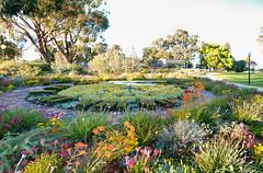 Perth Trip (22 of 33) (beLarge) Tags: perthtrip 2015 kingspark