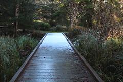 This bridge wanted to hurt me (rozoneill) Tags: bastendorff beach bog trail sunset bay state park coos jetty charleston oregon coast oct hiking