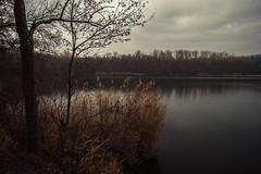 Lakeside Meditation (Netsrak (on/off)) Tags: liblarerseen see lake reed schilf tree trees baum bäume wald forest woods clouds erftstadt nordrheinwestfalen deutschland de untersee