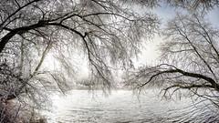 Rhein (stega60) Tags: rhein winter eis frost nebel kalt sw hdr bäume ice fog cold water wasser bw snow trees schnee fluss river isteinerschwellen stega60