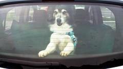 In viaggio (pattyconsumilano) Tags: simon cane